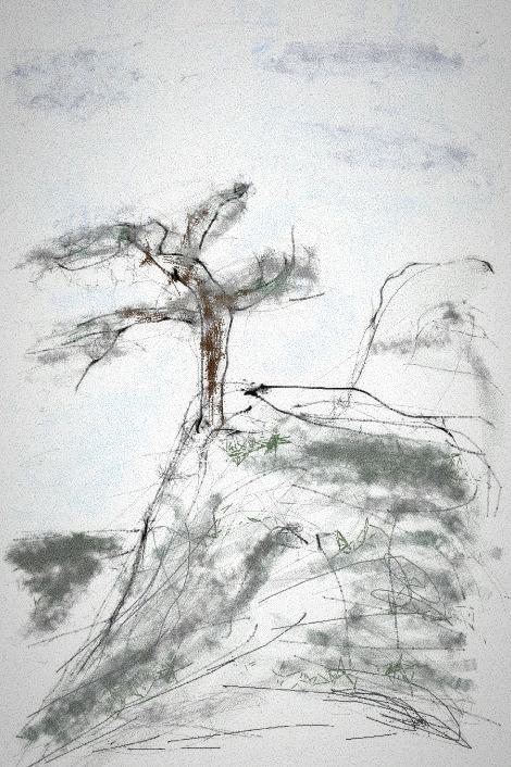 Одинокое тысячелетнее дерево в горах
