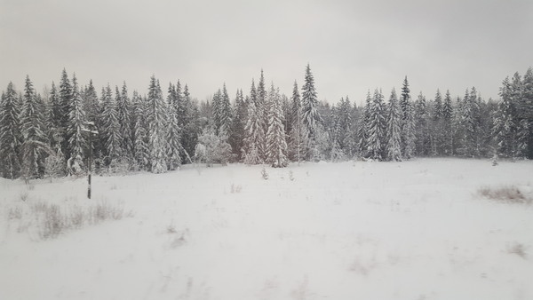 В краю северных лесов, вид из окна поезда, Архангельская область, февраль 2019 года