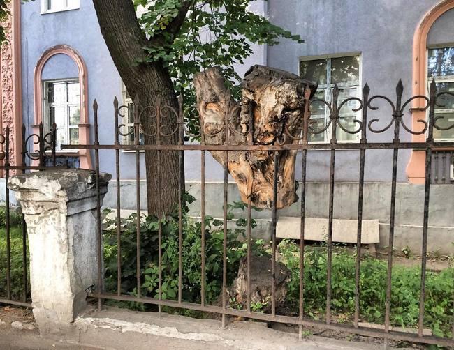 В подвешенном состоянии - дерево, вросшее в забор