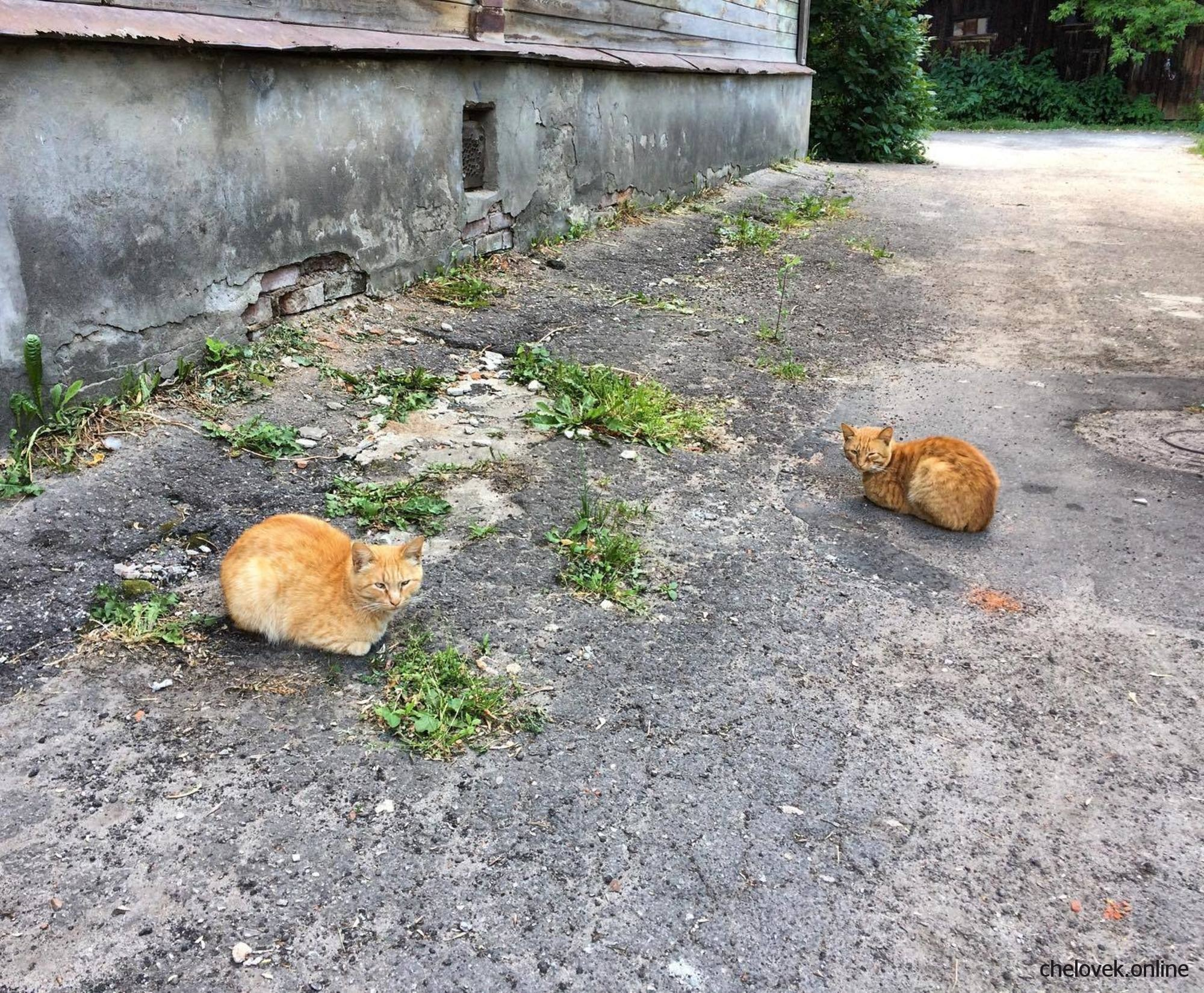 Два рыжих кота у старого дома