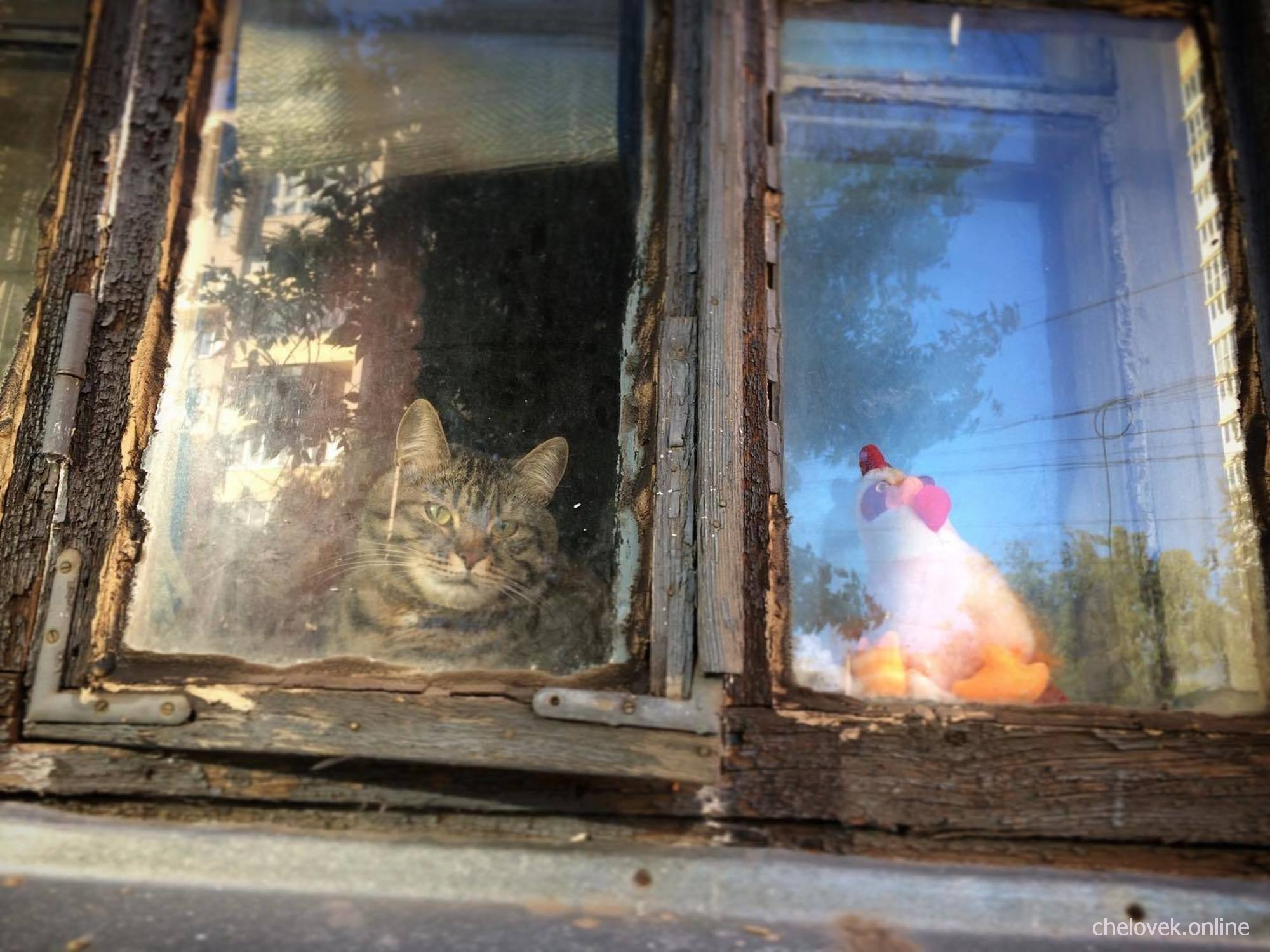 Кот в окне старого дома в центре Нижнего Новгорода