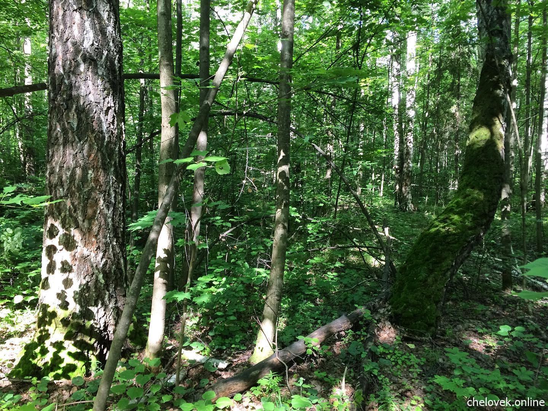 Летний лес. Природа России. Игра солнечного света в тихом лесу