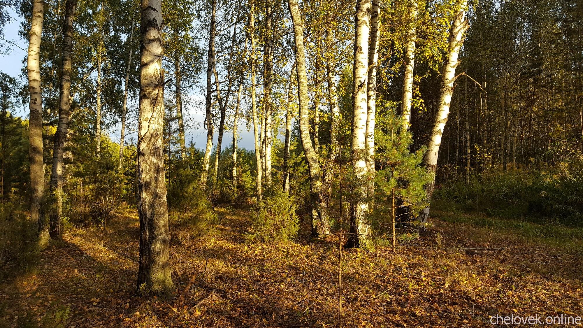 Золотая осень, на закате дня. Сентябрь 2019 года